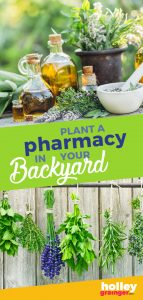 Plant a Pharmacy in Your Backyard, from Holley Grainger