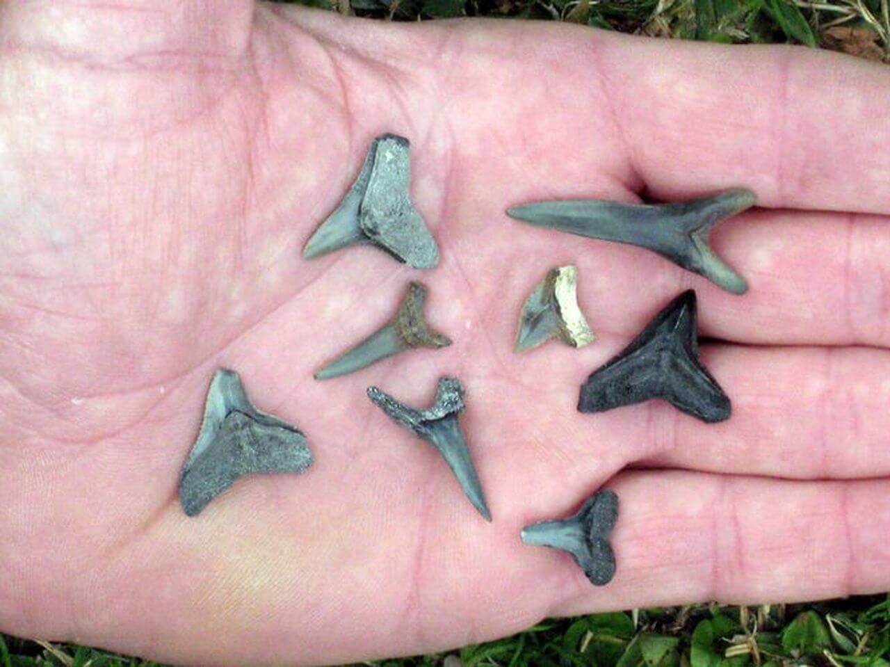 Shark Tooth Creek - Day Trips around Alabama