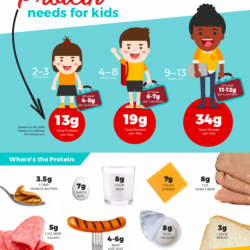 How Much Protein Does My Child Need?