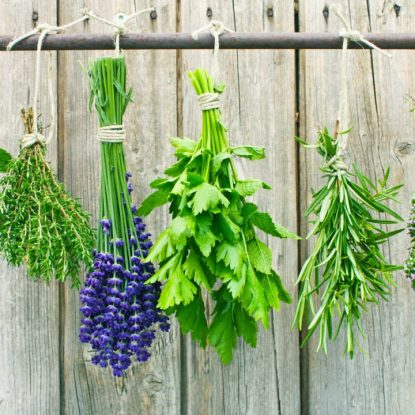 Plant a Pharmacy in Your Backyard, Herbs hanging on fenceline
